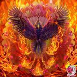 Profile of Phoenix F.